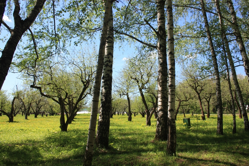 Ясная Поляна. Старый яблоневый сад.